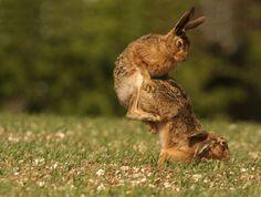 Les animaux les plus drôles (en images)