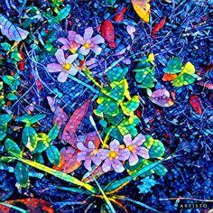 Random wildflowers