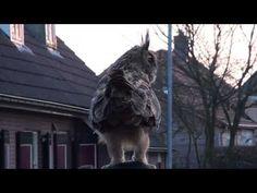 Friendly owl
