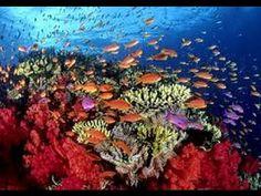 Los Corales en el Mar Caribe - Guarderías del mar - TvAgro por Juan Gonz...