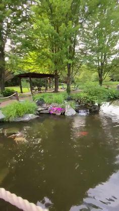 Backyard Water Feature, Ponds Backyard, Garden Ponds, Pond Landscaping, Landscaping With Rocks, Garden Pond Design, Landscape Design, Fish Pond Gardens, Water Gardens