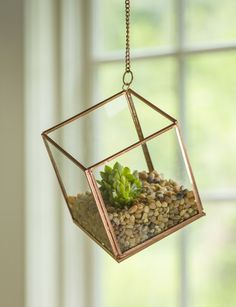 Elevate Your Decor with our Hanging Cube Glass Terrarium Terrarium Plants, Glass Terrarium, Succulent Terrarium, Terrarium Centerpiece, Succulents Garden, Glass Vase, Air Plants, Indoor Plants, Cactus Plants
