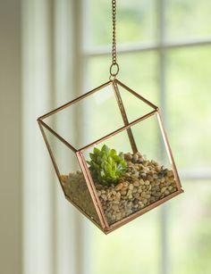 Hanging Cube Terrarium