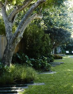 Landscape architect William Dangar replaced a derelict house in Australia with a smaller one to make more room for his family garden with a fish pond, large lawn, and specimen trees in suburban Bondi Beach. Derelict House, Australian Native Garden, Garden Fence Panels, Specimen Trees, Coastal Gardens, Fish Ponds, Family Garden, Home Landscaping, Outdoor Plants