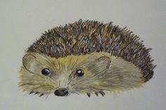 Hedgehog card - water colour and gouache
