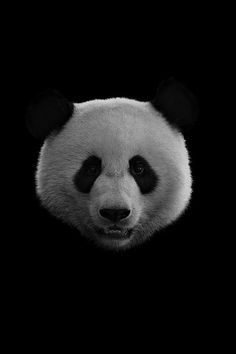 ~REFLECTIONS~ I live by a principle, a thought, that evereything that you reflec. Cute Panda Wallpaper, Funny Phone Wallpaper, Animal Wallpaper, Animals Beautiful, Cute Animals, Dry Brush Painting, Panda Wallpapers, Principles Of Art, Tier Fotos