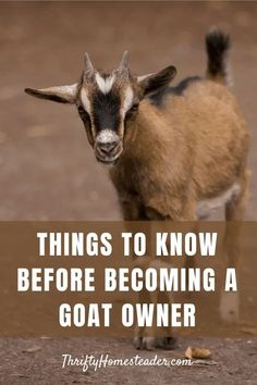 Breeding Goats, Things To Know, Old Things, Female Goat, Goat Care, Raising Goats, Goat Farming, Baby Goats, In Case Of Emergency