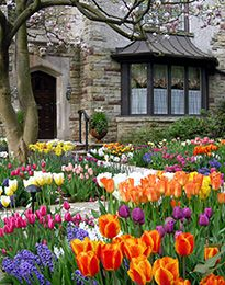 It's almost time to plant tulip bulbs for Spring!