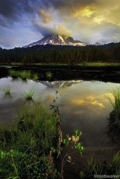 Reflection Lake by roots walker ~  Mount Rainier, Washington, US*