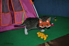 ~Tails from the Foster Kittens~: Wordless Wednesday - Kittens go Camping - Scary Stories