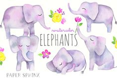 Watercolor Elephants Pack by PaperSphinx on @creativemarket