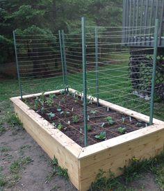 4' x 8' Raised garden bed + Garden lattice string kit + square foot gardening = our very first vegetable garden. :)