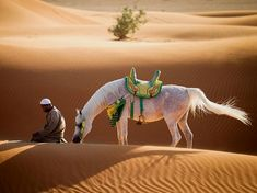 A man kneels in front of a white horse in the desert of Sharjah, United Arab Emirates, in this National Geographic Photo of the Day. United Arab Emirates Nature Información en nuestro sitio https://storelatina.com/unitedarabemirates/travelling #Árabes #vacaciones #detoxify #አረብ