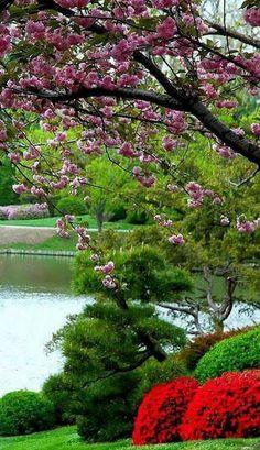 Beautiful Photos Of Nature, Nature Photos, Amazing Nature, Beautiful Birds, Beautiful Landscapes, Beautiful Images, Beautiful Gardens, Foto Picture, Spring Scenery