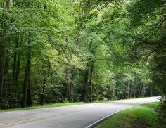 Scenic Drive in the Great Smoky Mountains, Tennessee