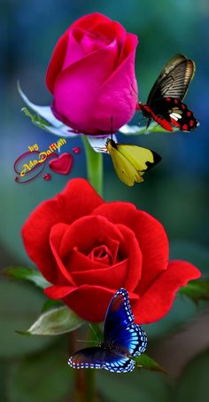 Foto Good Morning God Quotes, Good Morning Cat, Good Morning Nature, Good Morning Roses, Good Morning My Friend, Good Morning Greetings, Good Morning Images, Good Morning Beautiful Flowers, Beautiful Love Pictures