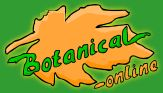 Hamburguesa o Croquetas de garbanzos con alga Wakame - Recetas con algas