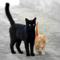 Pretty Cats, Beautiful Cats, Animals Beautiful, Cute Animals, I Love Cats, Crazy Cats, Cool Cats, Cute Kittens, Cats And Kittens