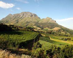 Winelands. Stellenbosch, South Africa