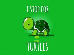 The popularity of tortoises as pets has increased over time. This is because they are silent, they do not shed any far and they are cute. They are most cute Cute Turtles, Baby Turtles, Sea Turtles, Animals And Pets, Baby Animals, Cute Animals, Pet Turtle Care, Turtle Quotes, Turtle Time