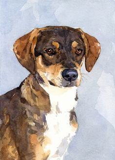zoey - dog portrait