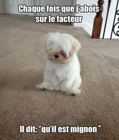 Chien pas très méchant ! http://www.15heures.com/photos/GGqz?utm_source=SNAP…