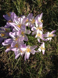Forår i haven  #springinDenmark #springinthegarden