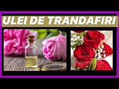 Cum facem ULEI DE TRANDAFIRI The Creator, Youtube, Perfume Bottles, Medical, Fragrance, Medicine, Perfume Bottle, Med School, Youtubers