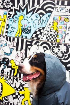 http://www.landog.com.br/estilo/os-beneficios-da-capa-de-chuva-para-cachorro/