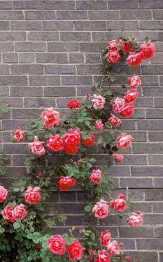 Garden Design, Floral Wreath, Wisteria, Wreaths, Gardening, Home Decor, Roses, Horsehair, Lavender