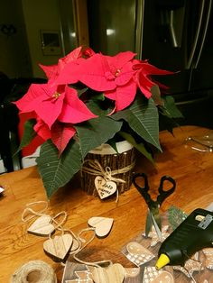 DIY vase for poinsettia, with little branches a bow and a glue gun!