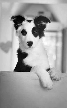 Inspiration noir et blanc :-) beautiful dog, beautiful photogtaphy