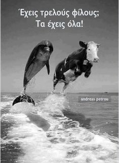 Here is a nice collection of AMUSING ANIMAL ANTICS from around the web just for you animal lovers out there. Some of these are natural while others looked staged. I've tried to include somewh… Animals And Pets, Baby Animals, Funny Animals, Cute Animals, Animal Antics, Animal Memes, Funny Animal Pictures, Cute Pictures, Fluffy Cows