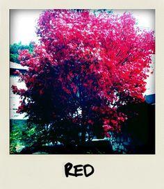 Polaroid  Acero rosso