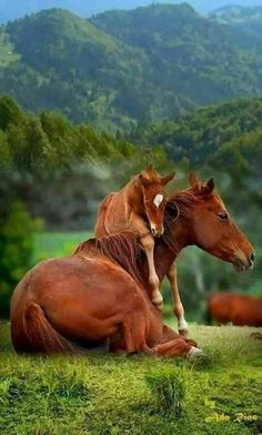 wish we lived in a world where all animals could live as families like humans. A… – Tiere Cute Horses, Pretty Horses, Horse Love, Cute Baby Animals, Animals And Pets, Funny Animals, Nature Animals, Animals Planet, Exotic Animals