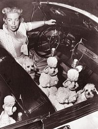 Phyllis Morris with her pink poodles and pink poodle lamps!