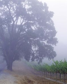 Peaceful foggy country road