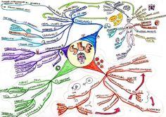 Mindmap SLE