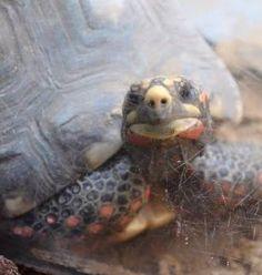 """Schildkröte """"was guckst du"""""""