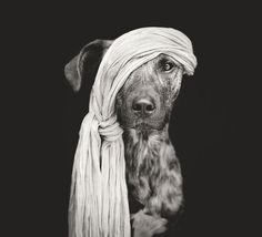 Los retratos caninos de Elke Vogelsang #photography | OLDSKULL.NET