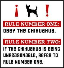 Chihuahua Rules - and so very true!  This is how it works at our house!! lol.