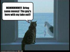too funny http://sulia.com/my_thoughts/ea1356a9-6439-4ff3-b8ec-fb28a5506dbb/?pinner=119686333