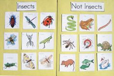 insects vs. not insects