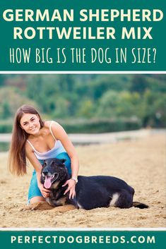 If you'd not yet figured, the Shepweiler is a large dog. The German Shepherd Rottweiler Mix's size will depend on their parents, however most range from in height. Read our guide to learn more. Large Dog Breeds, Large Dogs, German Shepherd Rottweiler Mix, The Loyal, Giant Dogs, Parents, Range, Reading, Dads