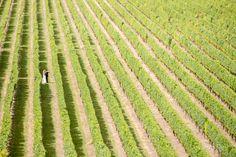 weddings-at-mission-estate-winery    Hawke's Bay wedding photographers, Eva Bradley Photography  https://www.evabradley.co.nz/  #hawkesbayweddings  #nzweddings  #hawkesbayweddingvenues