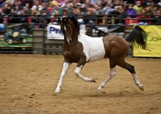 Horses that like to show off... http://www.facebook.com/cowboymagic