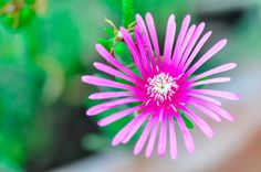 Flower by Dragan Stanisic on 500px
