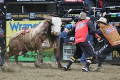 Shorty Gorham and Frank Newsom step in front of Lufkin's Geronimo during the first round of the Des Moines Built Ford Tough series PBR. Photo by Andy Watson with BullStockMedia.com