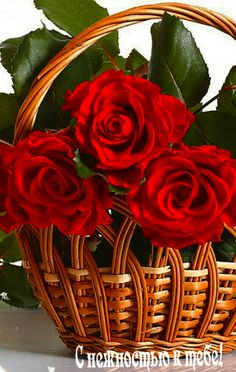 Red roses in woven basket. Beautiful Gif, Beautiful Roses, Exotic Flowers, Pretty Flowers, Flowers Gif, Red Flowers, Valentine Day Love, Valentines, Bouquets