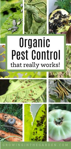Organic Pest Control That Really Works - Growing In The Garden